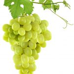 Natural skincare ingredient grapeseed oil