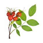Natural skincare ingredient rosehip oil